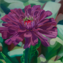 Purple Zinnia I   12X12   2020